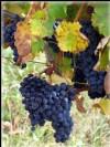 Bordeaux Propriété viticole de 22ha