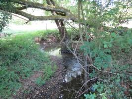 Terrain (5629m2) avec ruisseau et source naturelle