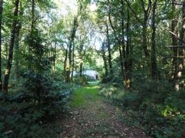 Forêt avec hangar agricole de 120 m².